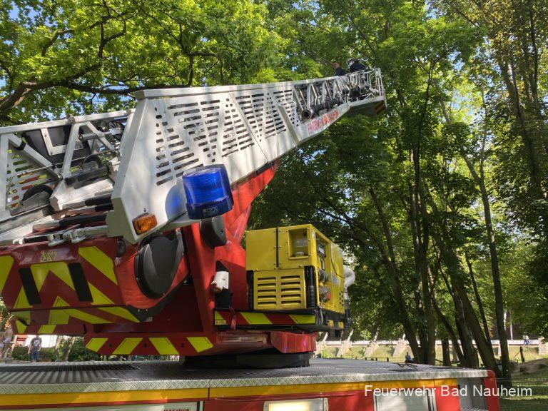 Read more about the article Ast droht auf Spielplatz zu fallen